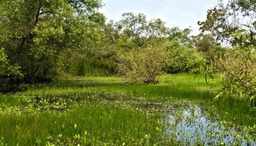 Madrona Marsh Preserve & Nature Center