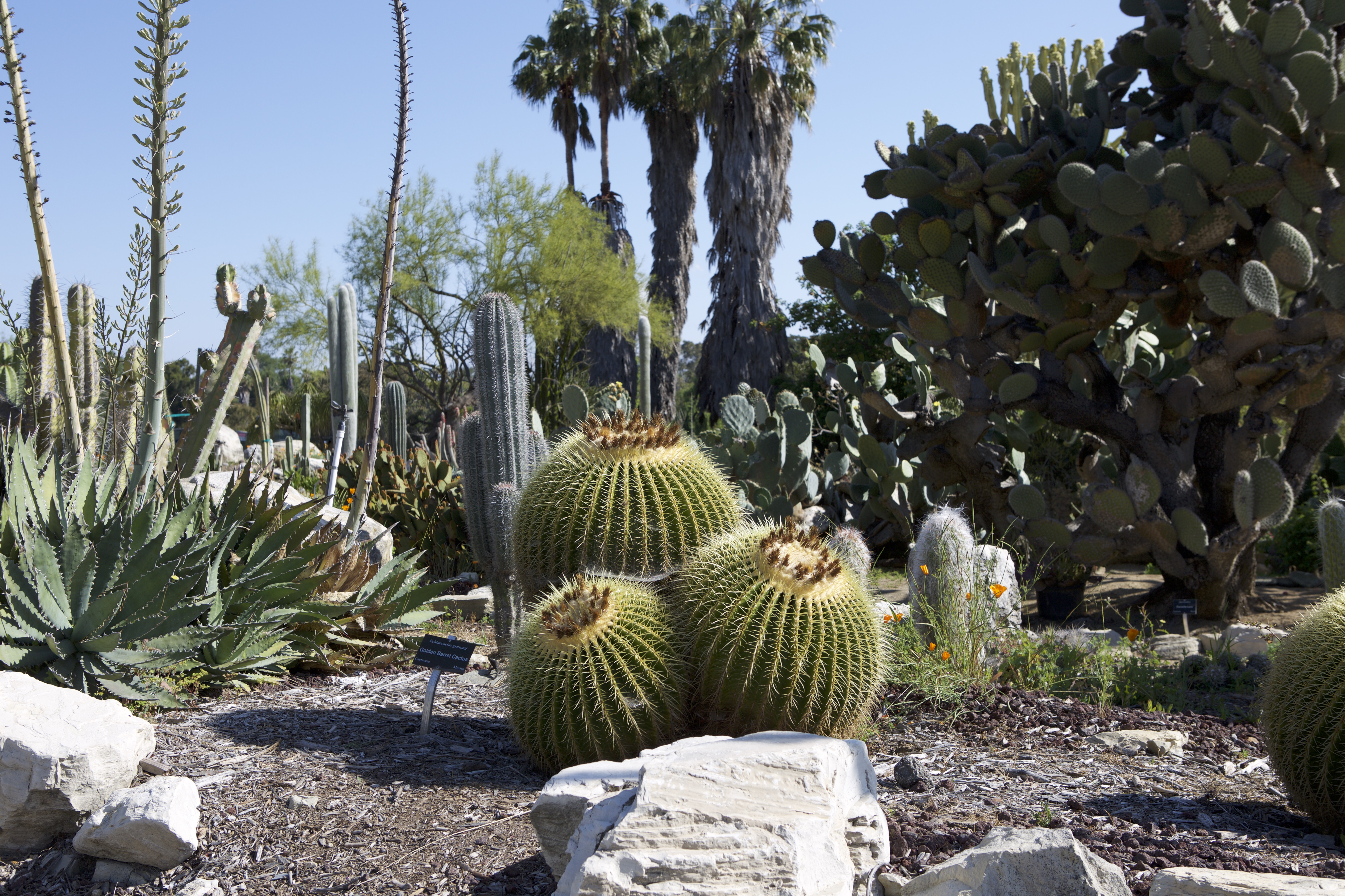 South Coast Botanic Garden: Jewel Of The Palos Verdes Peninsula   Discover  Torrance